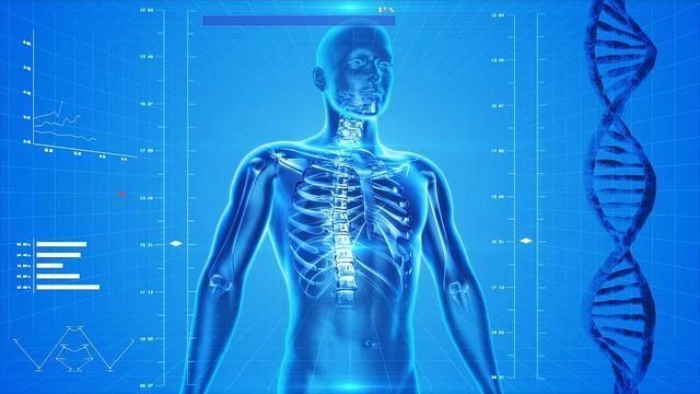 menschlicher Körper Bodybuilding Fachbegriffe
