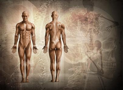 Wissenswertes zur Muskulatur: Aufbau und Funktion im Sport